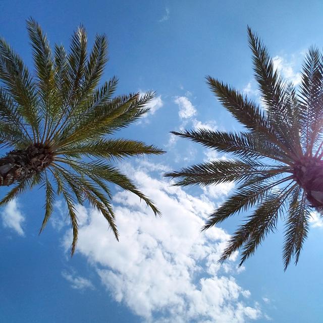 Palm trees in Destin
